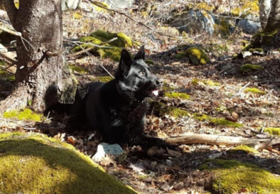RCMP Human Remains Detection Dog – Innovative Research in Nova Scotia